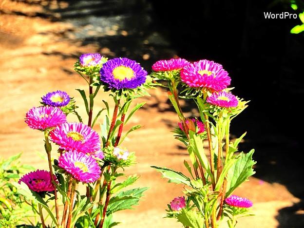 Photos: 0100_Fotor