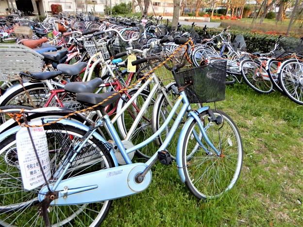 Photos: 撤去・廃棄自転車