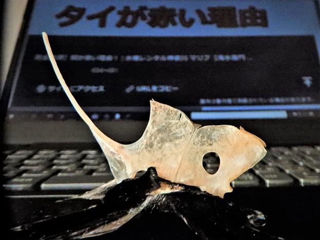Photos: 「鯛中鯛逆翻訳も鯛中鯛」