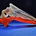 ひらまさの鯛の鯛 「コロナには風邪の対処で乗り切れる」