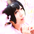 写真: 恋桜
