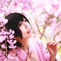 写真: 千本桜