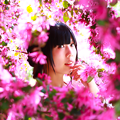 Photos: 万華桜