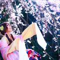Photos: 櫻の精
