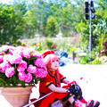 赤い服の少女とピンクの紫陽花