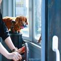 Photos: 犬の運転士
