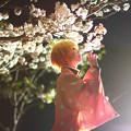 Photos: 紅蓮桜