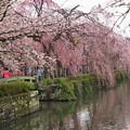 写真: 神池に舞い落ちた花びら