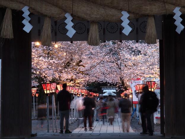 外構えの門(総門)と夜桜と