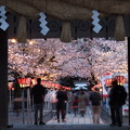 写真: 外構えの門(総門)と夜桜と