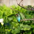写真: 小枝の上から狙いを定めて…