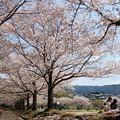 写真: 桜の下で寛ぐ休日 *a