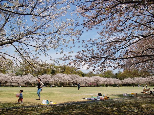 桜の下で寛ぐ休日 *c