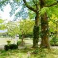 写真: クレマチス咲くガーデン