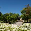 写真: 皐月晴れの青い空