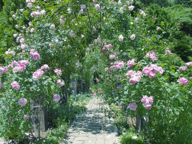 写真: 薔薇の小径 *a