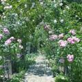 薔薇の小径 *a