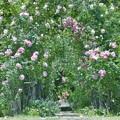 写真: 薔薇の小径の向こう側