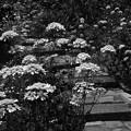 写真: 階段の花壇