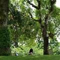 写真: 木陰で寛ぐひと