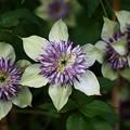 Photos: たてがみの様な花びら