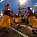 Photos: わくわく踊りの蝶 *b