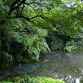 写真: 湧水溢るる柿田川 *b
