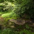 写真: 湧水溢るる柿田川 *c