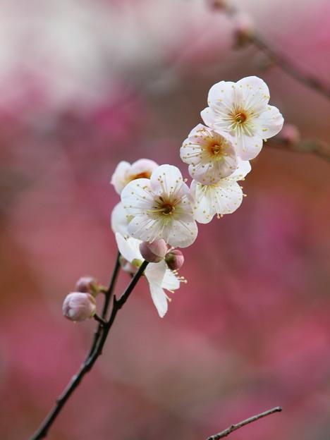 せせらぎを彩る春の使者 *a