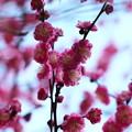 写真: せせらぎを彩る春の使者 *c