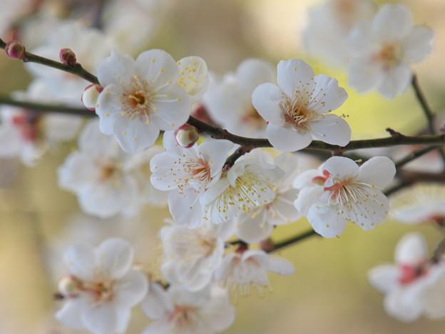 春よ来い~せせらぎの小径 *c