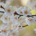 写真: 春よ来い~せせらぎの小径 *c