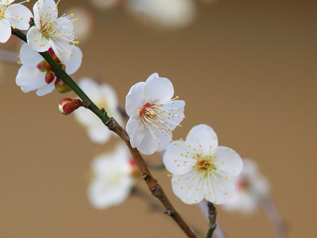 写真: 春よ来い~せせらぎの小径 *d