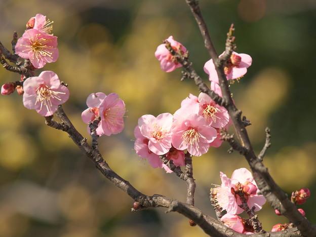 写真: 春よ来い~せせらぎの小径 *a
