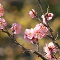 Photos: 春よ来い~せせらぎの小径 *a