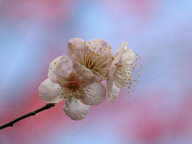 写真: 春よ来い~せせらぎの小径 *f