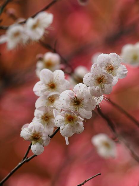 春よ来い~せせらぎの小径 *g