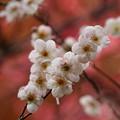 写真: 春よ来い~せせらぎの小径 *g
