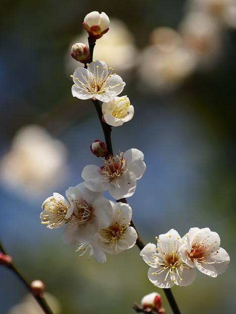 春の香りの日射しを受けて