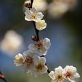 写真: 春の香りの日射しを受けて