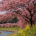 写真: 春の香り漂う川辺