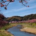 Photos: 両側いっぱいの春色