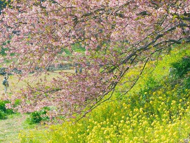 花は咲く~311