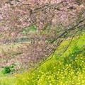 写真: 花は咲く~311