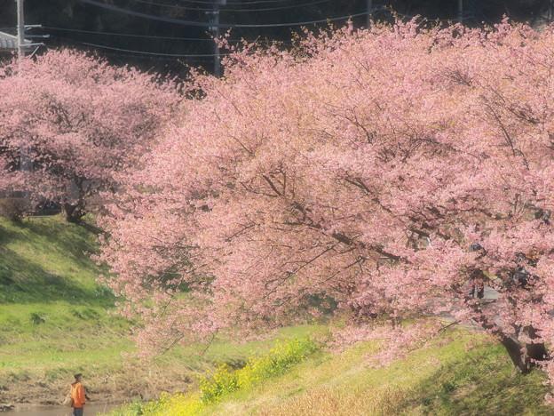 ふんわり春色