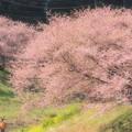 写真: ふんわり春色