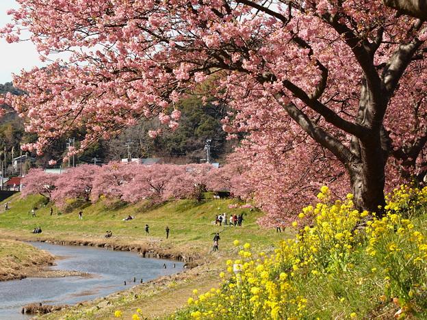 春色に染まった青野川
