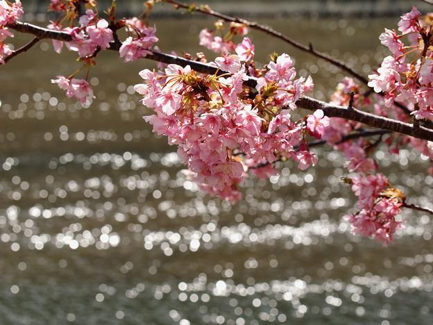 キラキラ流るる青野川