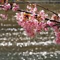 写真: キラキラ流るる青野川