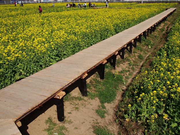 菜の花畑の回廊